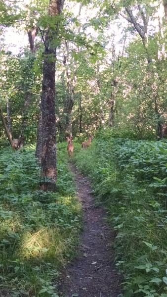 deer_trail