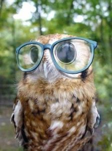 hipster_owl