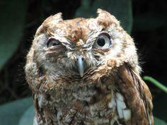 owl_eyes